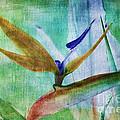 Bird Of Paradise Watercolor by Deborah Benoit