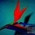 Bird Of Paradise With Blue Background by Susan Carella