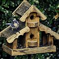 Bird On A House by Image Takers Photography LLC - Carol Haddon