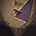 Bird On A Ledge by Robert Geary