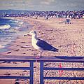 Bird On A Rail by Phil Perkins