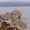 Bird On A Rock by Pharris Art