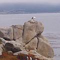 Bird On A Rock by Pharris Art