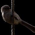 Bird On A Rope 2 by Ernie Echols
