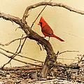 Bird On A Vine by Jayne Wilson