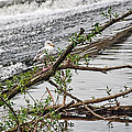 Bird On A Weir by Susie Peek