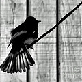 Bird On A Wire I by Jennie Breeze