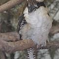 Bird On Branch II by Dennis Godin
