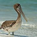 Bird On The Beach by I I
