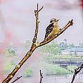 Bird On The Brunch by Viktor Birkus