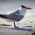 Bird On The Shoreline by Laurie Pike