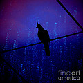 Bird On The Wire ... by Chris Armytage