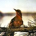 Bird On The Wire by Luis Ludzska