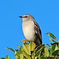 Bird On Tree Top by Cynthia Guinn