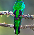 Bird Perching On A Branch, Savegre by Panoramic Images