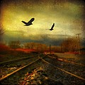 Country Bird Rail by Gothicrow Images