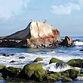 Bird Sentry Rock At Dana Point Harbor by Elaine Plesser
