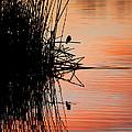 Bird Silhouette by Lisa Chorny