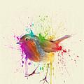 Bird Study by Zapista