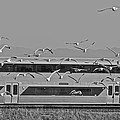 Bird Train Alviso 2 by SC Heffner