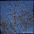 Bird Tree by Tara Potts