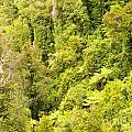 Bird View Of Lush Green Sub-tropical Nz Rainforest by Stephan Pietzko