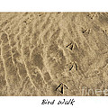 Bird Walk by Artist and Photographer Laura Wrede