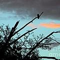 Bird Watching Sunrise by Judyann Matthews