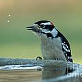 Birdbath Funtime by Lori Tordsen