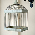 Birdcage by Grigorios Moraitis