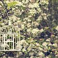 Birdcage In Blossom by Amanda Elwell
