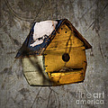 Birdhouse by Aimelle
