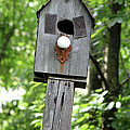 Birdhouse Collection I by Suzanne Gaff