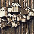 Birdhouse Condominium by Marcia Colelli