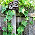 Birdhouse Sitting On A Fence by Kimberlee Baxter