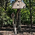Birdhouses In The Trees by Image Takers Photography LLC