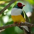 Birdie by Rob Hans