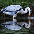 Birds 20 by Ben Yassa
