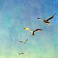 Birds Above by Michelle Calkins