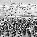 Birds by Alice Gipson
