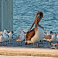 Birds - Among Friends by HH Photography of Florida