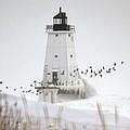 Birds And Lighthouse by Linda Kerkau