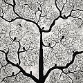 Birds And Trees by Sumit Mehndiratta