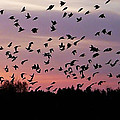 Birds At Sunrise by Aimee L Maher ALM GALLERY