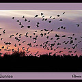 Birds At Sunrise Poster by Aimee L Maher ALM GALLERY