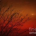 Birds At Sunset by Tom York Images