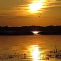 Birds At Sunset by Zina Stromberg