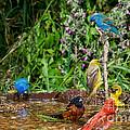 Birds Bathing by Anthony Mercieca