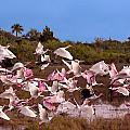 Birds Call To Flight by John M Bailey