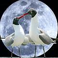 Birds Do It... by Mariarosa Rockefeller